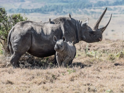 Intrepid launches new Ranger-inspired trip to Kenya