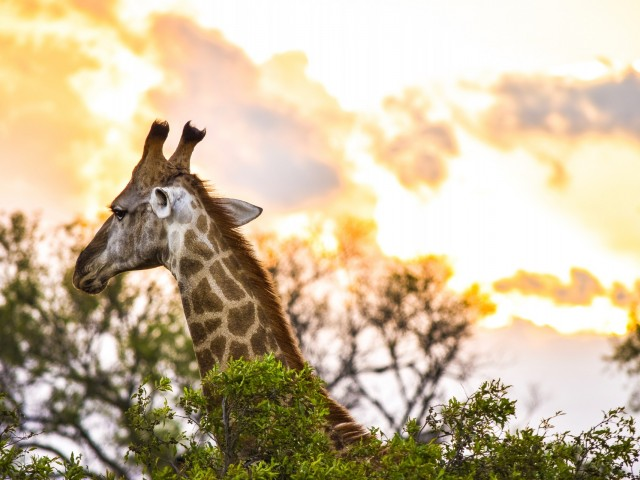 Goway's 2019 Africa and Middle-East Travel Planner is here
