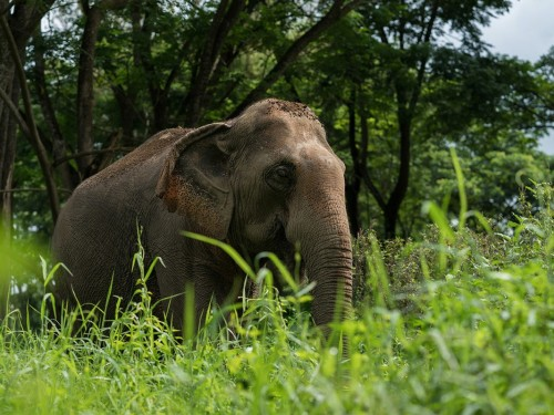 Animal tourism isn't popular with millennial travellers