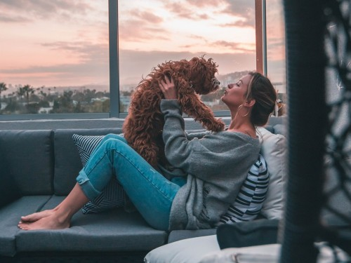 Delta partners with CarePod in support of safer pet travel