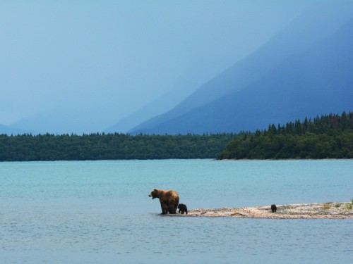 Save this spring on an Alaskan adventure with UnCruise