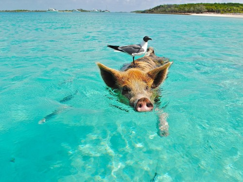 Three ways to go beyond the beach in the Bahamas