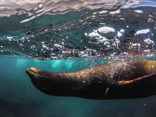 Channel your inner Charles Darwin with these Galapagos adventures