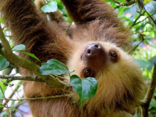 Costa Rica puts an end to animal selfies with new wildlife campaign