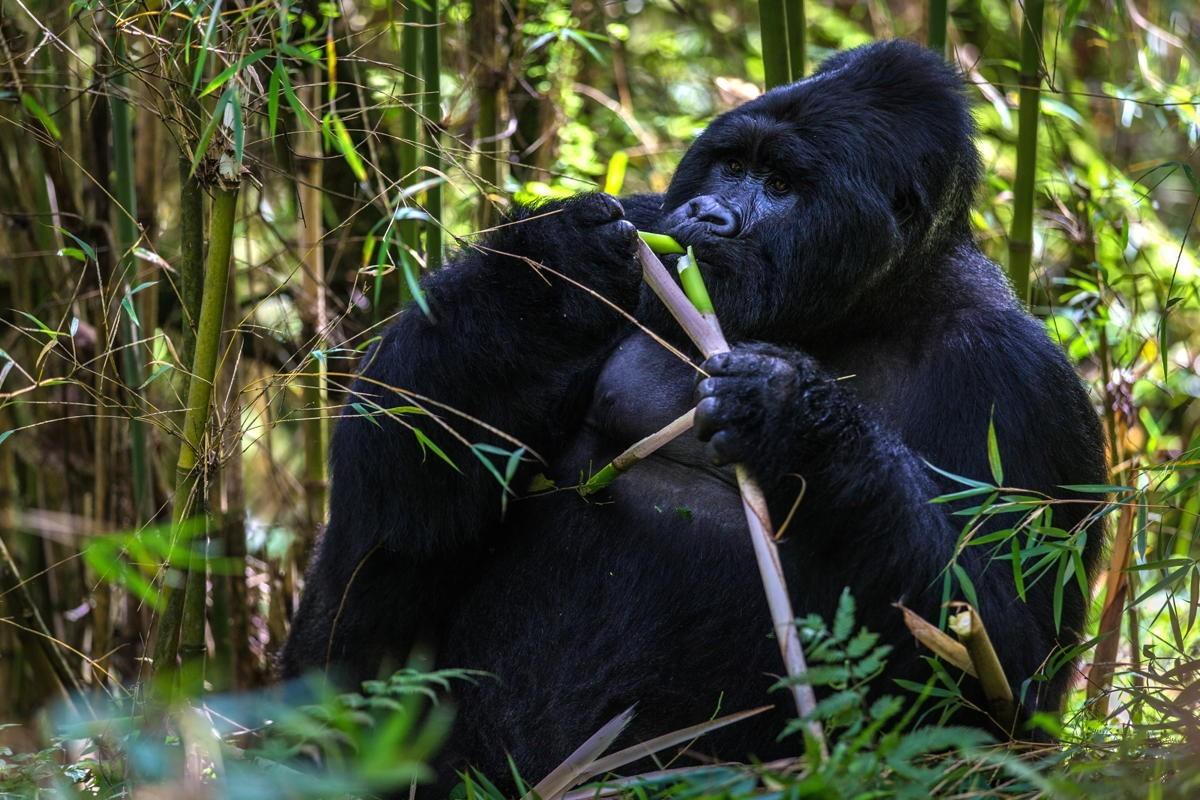 APTO, Uganda Tourism Board hosting agent webinar on Oct. 21