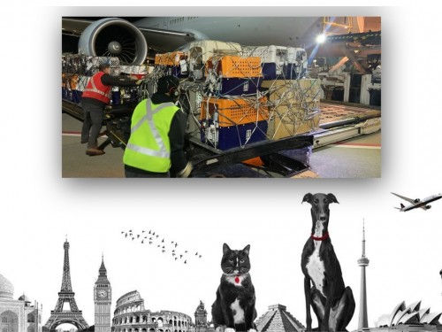 "70 cats & dogs fly home to Australia via ""Noah's Plane"" with Air Canada"