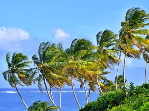 CTO launches Caribbean Community Tourism Network